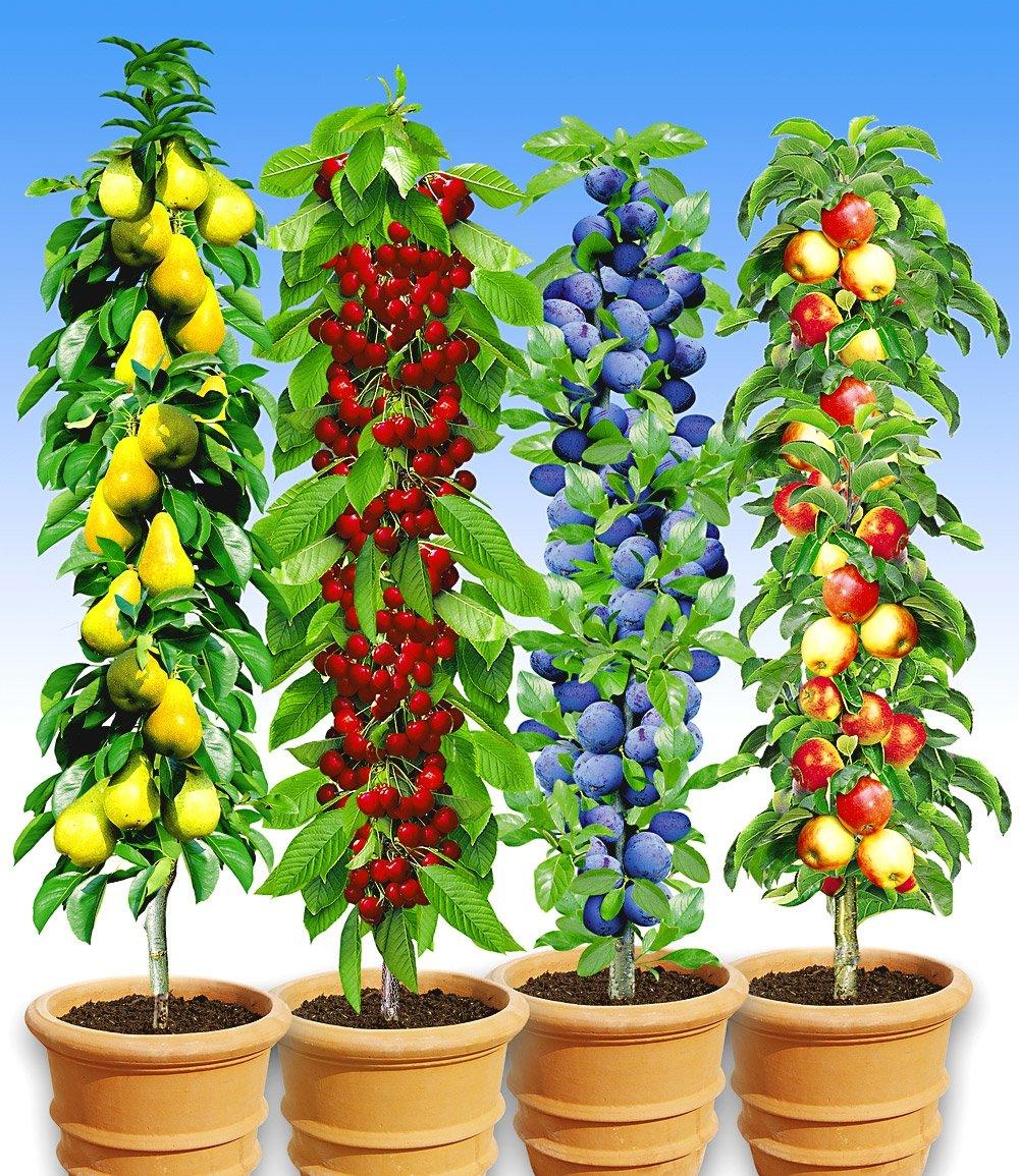 Säulen-Obst-Kollektion
