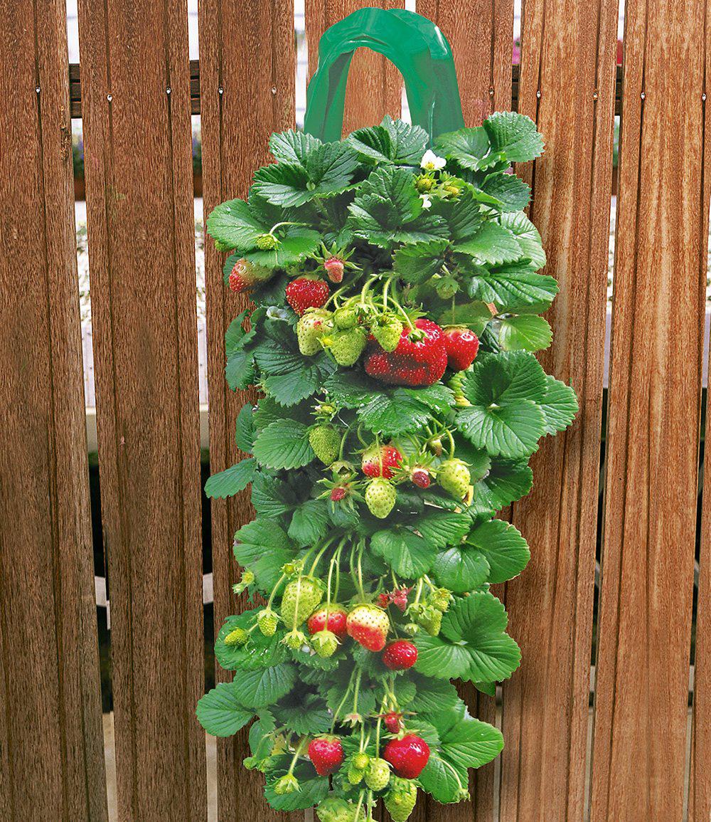 2 Erdbeer-Pflanzbeutel & 9 Hänge-Erdbeeren