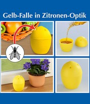 Gelb-Falle in Zitronen-Optik