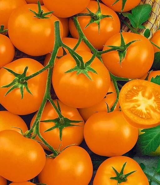 veredelte runde tomaten rarit ten gem se pflanzen veredelt bei baldur garten. Black Bedroom Furniture Sets. Home Design Ideas