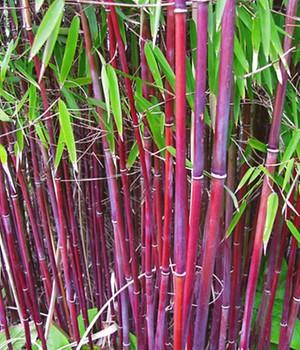 Japanische Pflanzen Japanischen Garten Anlegen Baldur Garten