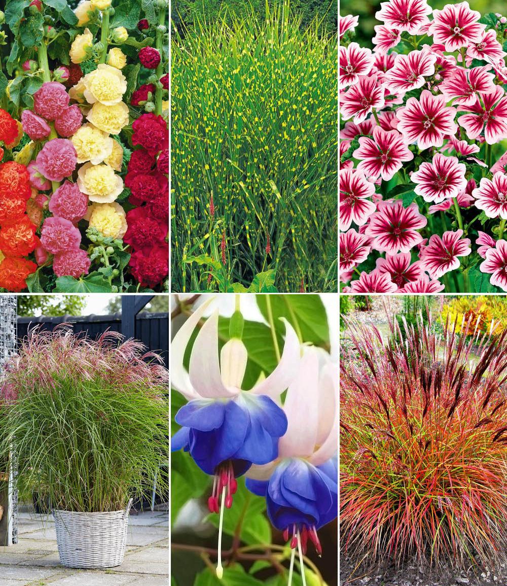 Winterhartes Staudenbeet 'Gräser & Blüten'