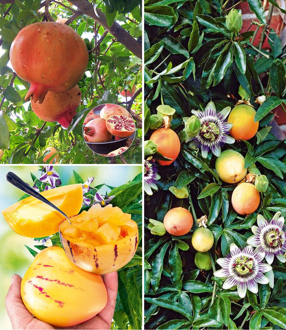 Exotisches Obst