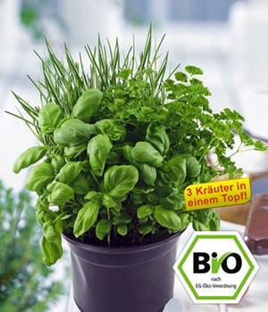 bio pflanzen jetzt online kaufen bei baldur garten. Black Bedroom Furniture Sets. Home Design Ideas