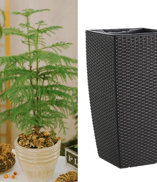 zimmertanne emsa casa mesh s ule b ropflanzen bei. Black Bedroom Furniture Sets. Home Design Ideas