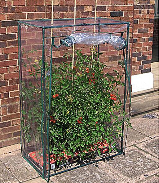 tomaten gew chshaus jetzt online kaufen baldur garten. Black Bedroom Furniture Sets. Home Design Ideas