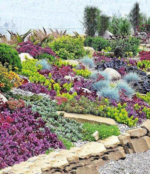 Stauden kollektion rock garden 1a pflanzen kaufen baldur for Garten stauden