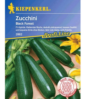 Kletter-Zucchini 'Black Forest' F1