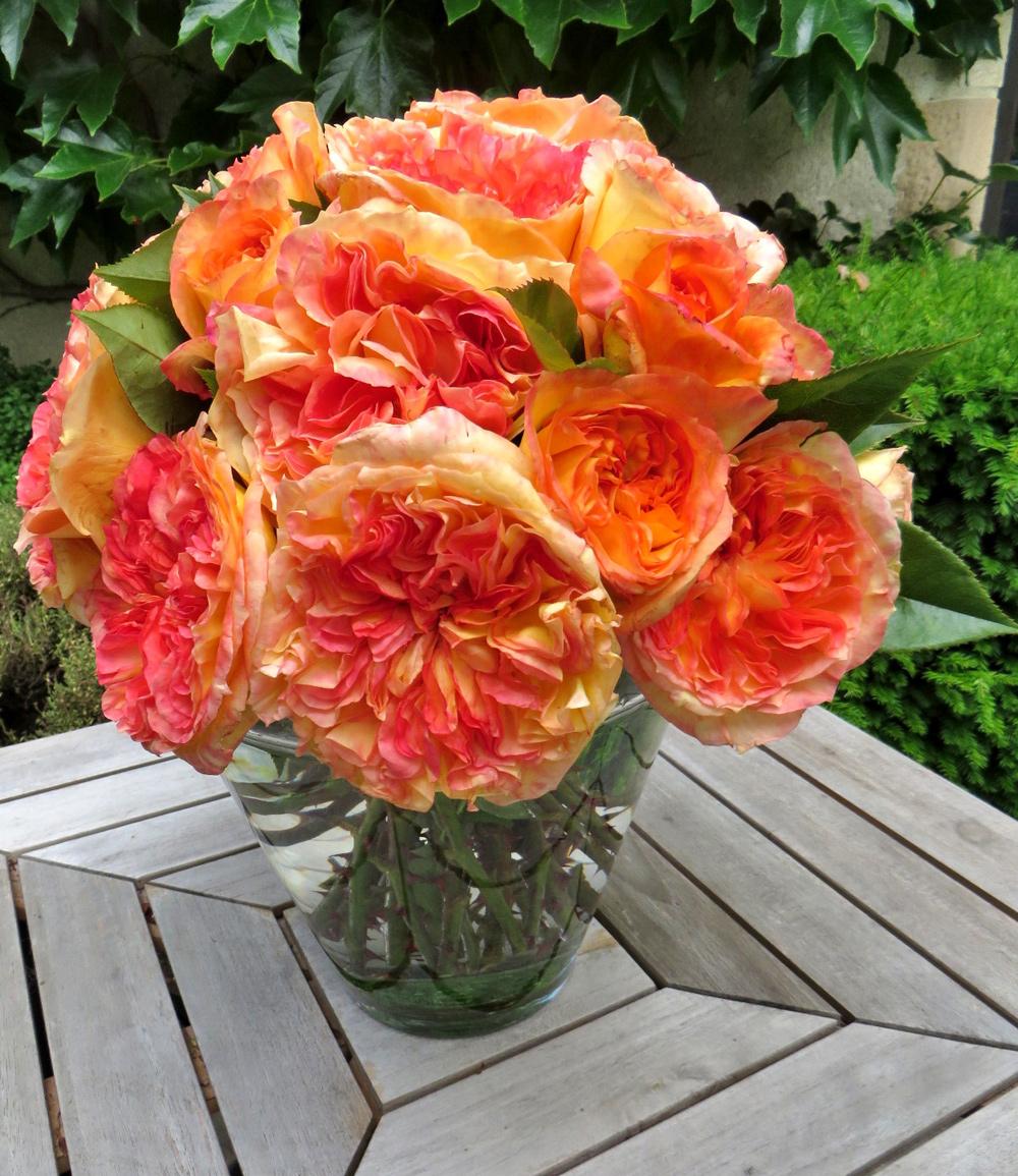 Parfum-Rose 'Henri Delbard®'