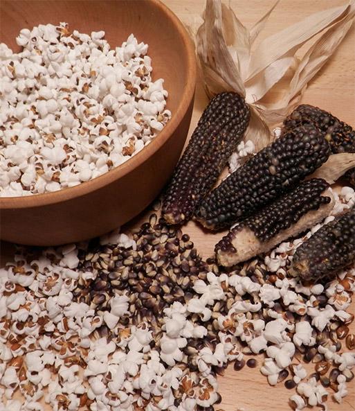lecker 100 /% Bio Anbau!!! 20  Mais Samen !Popcorn Mais