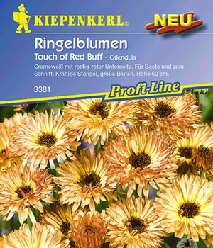 Ringelblumen 'Touch of Red Buff'