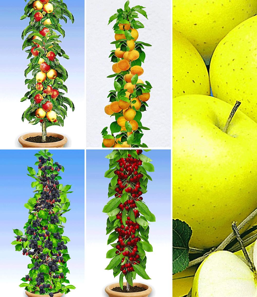 Obst für Balkon & Terrasse