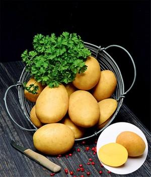 pflanzkartoffeln saatkartoffeln online bestellen bei. Black Bedroom Furniture Sets. Home Design Ideas