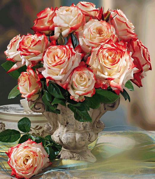 Parfum-Rose 'Impératrice Farah®': 1A-Rosenpflanzen Bestellen
