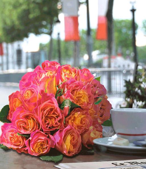 duftende rose der liebe 39 la parisienne 39 1a rosenpflanzen bestellen baldur garten. Black Bedroom Furniture Sets. Home Design Ideas