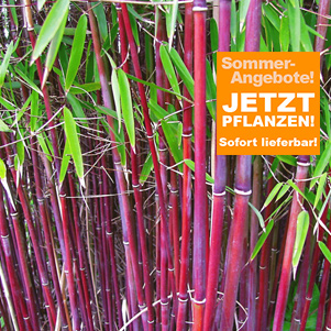 Sommer-Angebote A-Z