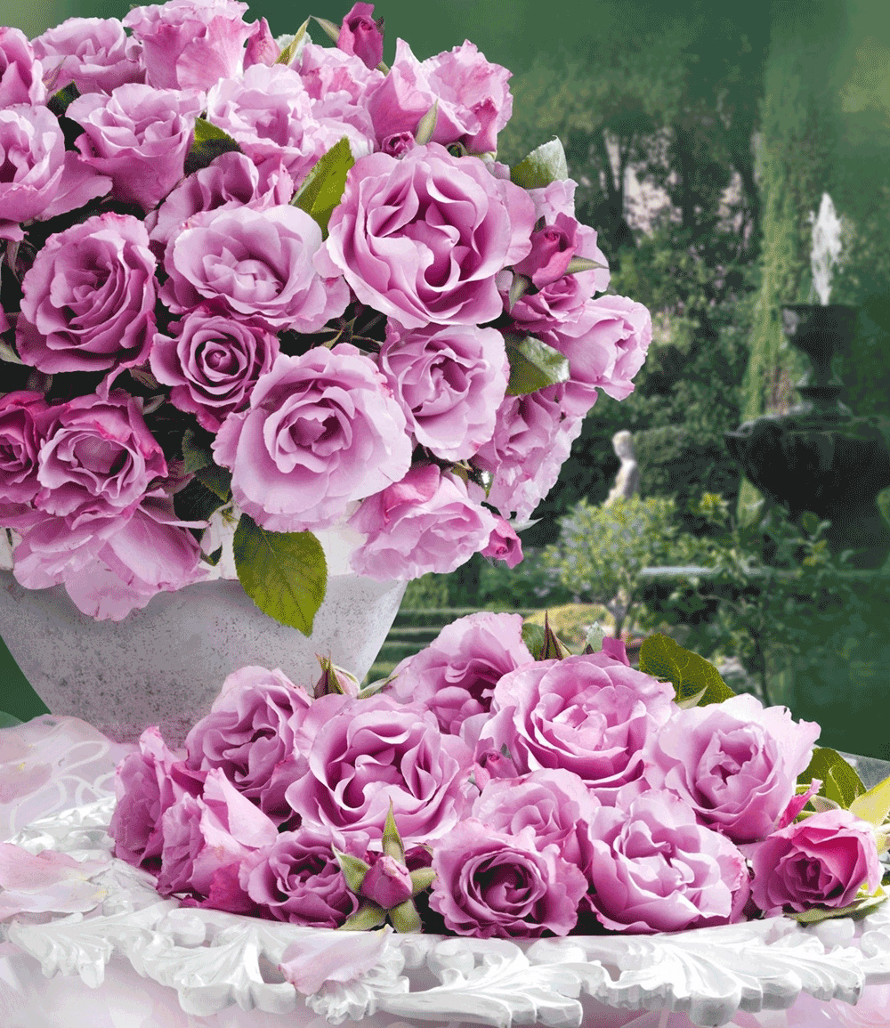 Parfum-Rose 'Dioressence®'