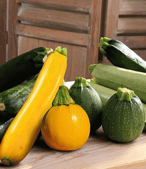 zucchini kollektion gem se pflanzen veredelt bei baldur garten. Black Bedroom Furniture Sets. Home Design Ideas