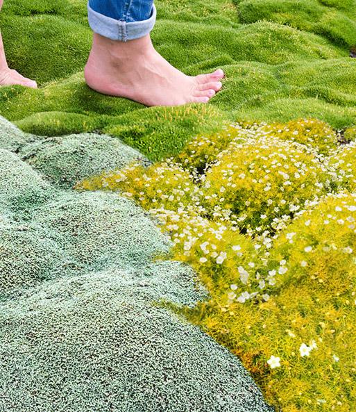 Moos kollektion top pflanzen online kaufen baldur garten for Moos bilder pflanzen