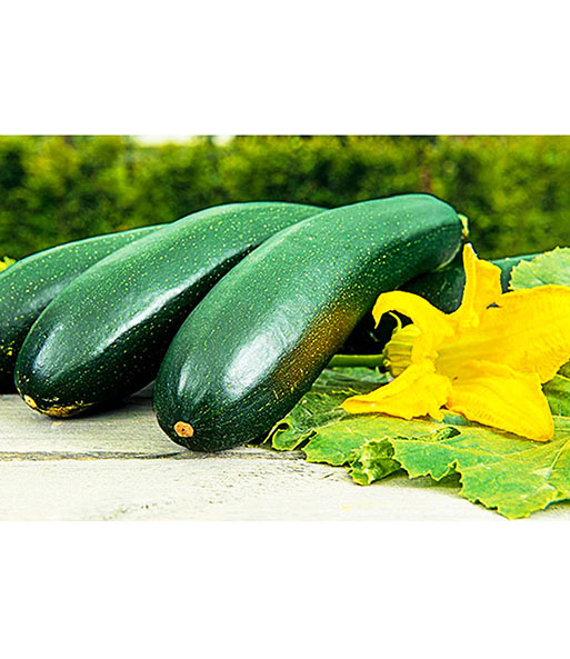 kletter zucchini alando 1a qualit t kaufen baldur garten. Black Bedroom Furniture Sets. Home Design Ideas