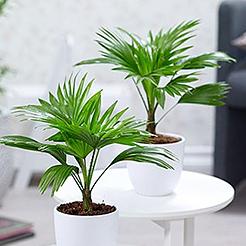 Pflanzenversand gartenversand pflanzen shop baldur for Pflanzenversand zimmerpflanzen