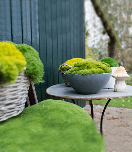 Moos lime green top pflanzen kaufen baldur garten for Green pflanzen