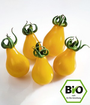 BIO-Cherrytomate 'Yellow Submarine'