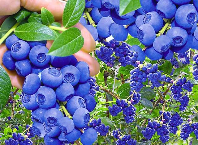 Pflanzenversand U0026 Gartenversand   Pflanzen Shop | BALDUR Garten